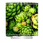 Hens And Chick Plants Shower Curtain