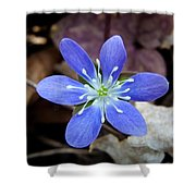 Hepatica Blue Shower Curtain