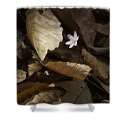 Hepatica In Filtered Light Shower Curtain