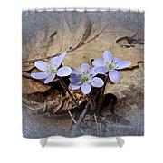 Hepatica Wildflowers - Hepatica Nobilis Shower Curtain
