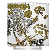 Herbal: Fennel, 1819 Shower Curtain