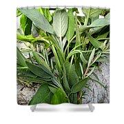 Herbs Shower Curtain