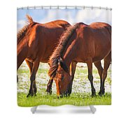 Herd 32 Shower Curtain