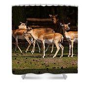 Herd Of Blackbuck Antilopes In A Dark Forest Shower Curtain
