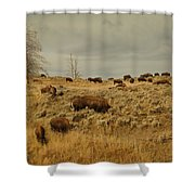 Herd Of Buffalo Shower Curtain