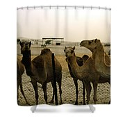 Herd Of Camels In A Farm, Abu Dhabi Shower Curtain