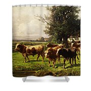 Herd Of Cows Shower Curtain