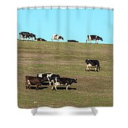 Herd Of Cows Grazing On A Hill, Point Shower Curtain