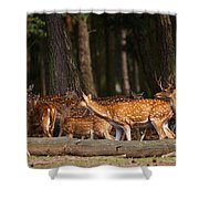 Herd Of Deer In A Dark Forest Shower Curtain