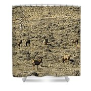 Herd Of Elk   #3218 Shower Curtain
