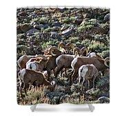 Herd Of Horns Shower Curtain