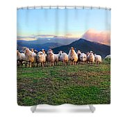 Herd Of Sheep In The Sunset Shower Curtain