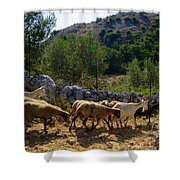 Herd Of Sheep In Tuscany Shower Curtain