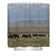Herd Of Wild Horses Shower Curtain by Juli Scalzi