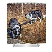 Herder And Herded Shower Curtain