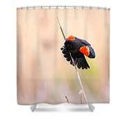 Here I Am Ladies - Red-winged Blackbird Shower Curtain
