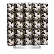 Here Kitty Kitty Close Up 25 Shower Curtain by Andee Design