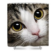 Here Kitty Kitty Close Up Shower Curtain by Andee Design