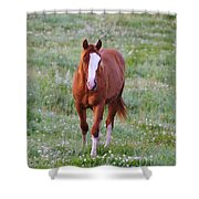 Here She Comes Shower Curtain