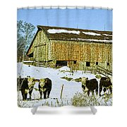 Hereford Barn Painting Shower Curtain