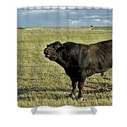 Hereford Bull Shower Curtain