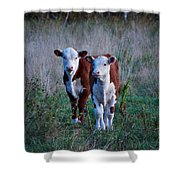 Herefords Shower Curtain