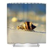 Hermit Crab  Shower Curtain by Debra Forand