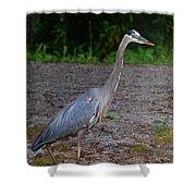 Heron 14-1 Shower Curtain