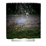 Heron 14-6 Shower Curtain