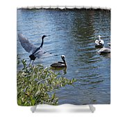 Heron And Pelicans Shower Curtain