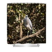 Heron At Katherine Gorge Shower Curtain