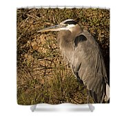 Heron Basking In The Morning Sun Shower Curtain