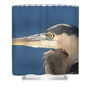 Heron Close-up Shower Curtain