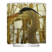 Heron Close Up Shower Curtain
