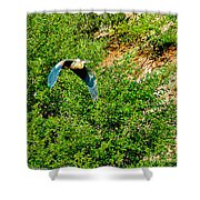 Heron Flies Over Oak Creek In Red Rock State Park Sedona Arizona Shower Curtain