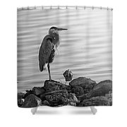 Heron In Black And White Shower Curtain