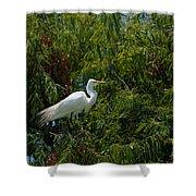 Heron In Tree Shower Curtain