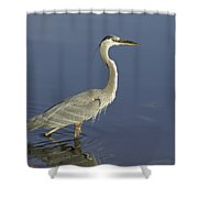 Heron In Wading Shower Curtain
