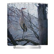 Heron Looking Out Shower Curtain