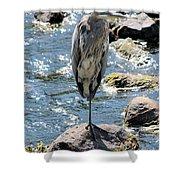 Heron On One Leg Shower Curtain