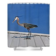 Heron On Rooftop Shower Curtain