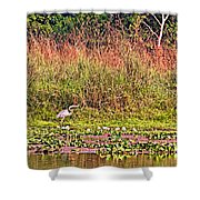 Heron On Shore Of Rapti River In Chitwan Np-nepal  Shower Curtain