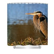 Heron On The Lake Shower Curtain