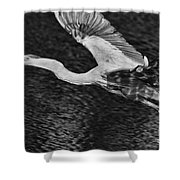 Heron On The Move Up Close Shower Curtain