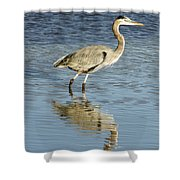 Heron Walking Through The Water. Shower Curtain