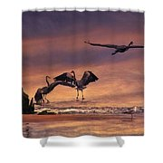 Herons At Sunset Shower Curtain