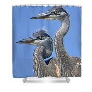 Herons On The Lookout Shower Curtain