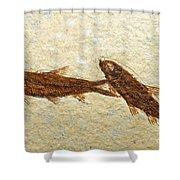 Herring Fish Fossil Shower Curtain
