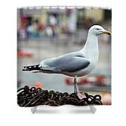 Herring Gull At The Harbour Shower Curtain