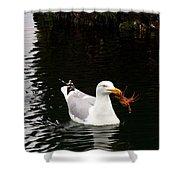 Herring Gull With Crab Shower Curtain
